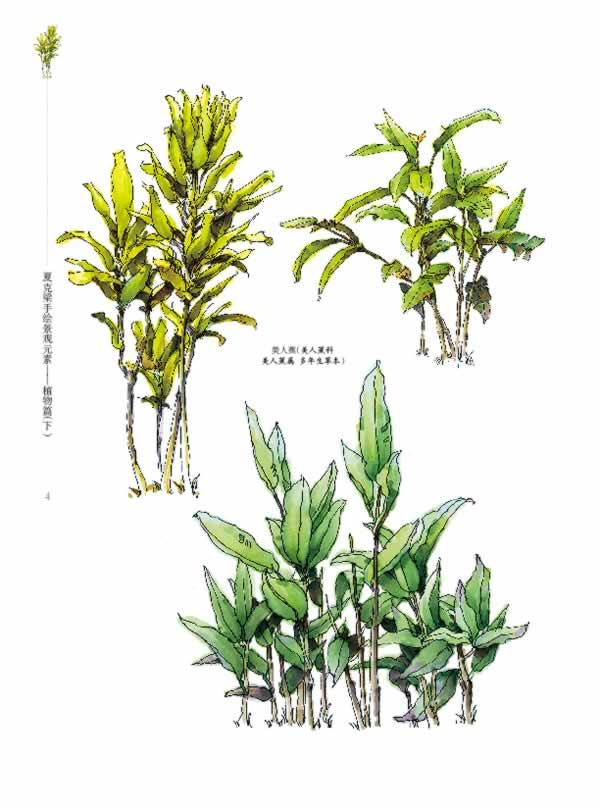 【rt6】夏克梁手绘景观元素——植物篇(下) 夏克梁 东南大学出版社