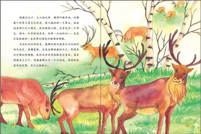 西顿动物故事小百科:白色驯鹿传奇