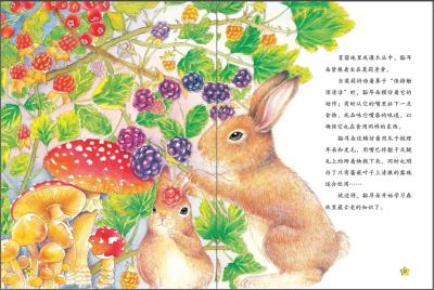 西顿动物故事小百科《棉尾兔豁耳朵》》