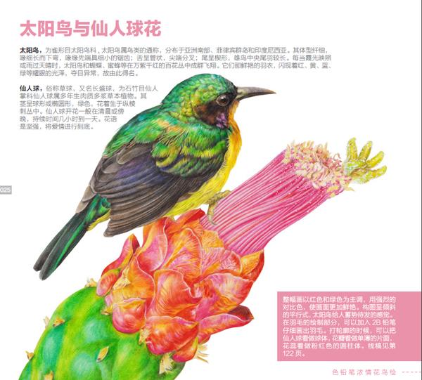 色铅笔绘画的基础练习 灰喜鹊与苹果花        教画步骤  线稿 银胸丝