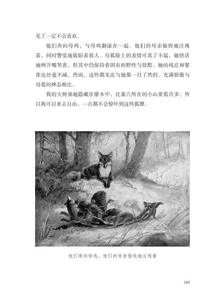 《西顿动物故事集 (加)西顿