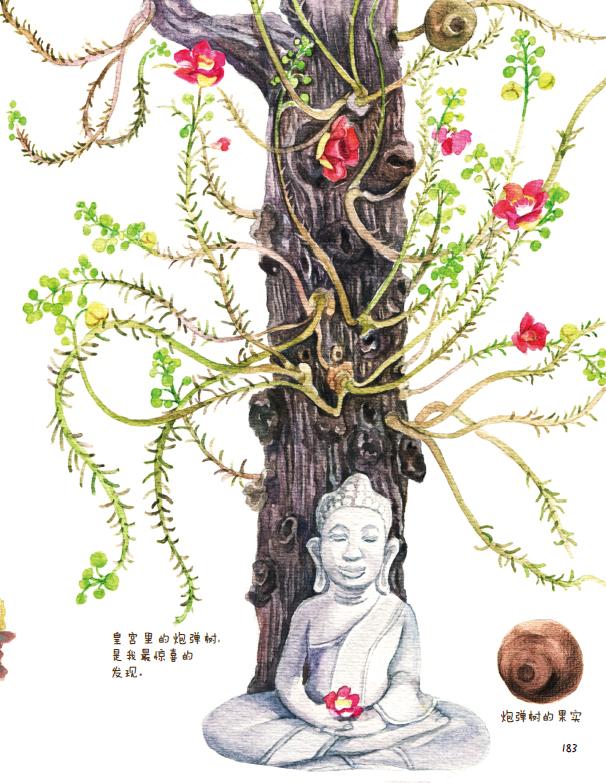 莲花初放:柬埔寨手绘旅行