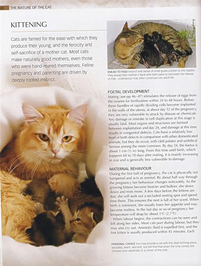《动物百科:猫eneycopedia》本社