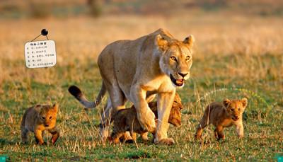 100种本领非凡的动物·动物中的狩猎大王