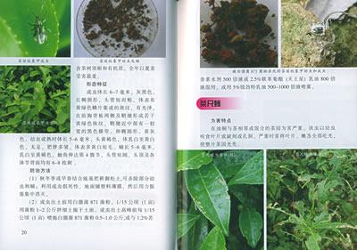 农业/林业 植物保护 茶树病虫害诊治图谱  版 次:1 页 数:57 字 数:42