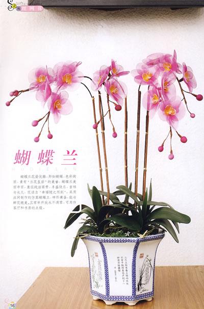 无论是娇艳芬芳的玫瑰花还是清新脱俗的君子兰,各种花卉在王老师的