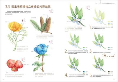 满包邮 色铅笔下的植物王国图片