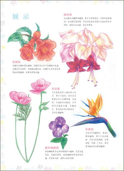 飞乐鸟的色铅笔手绘世界 花卉入门篇
