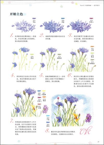 飞乐鸟的色铅笔手绘世界:花卉入门篇