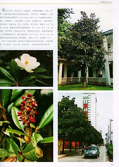 《中国木兰(中英对照)》