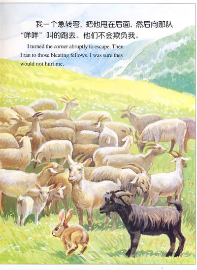 兔·虎·鸡·猫:动物日记(中英文对照·绘本)