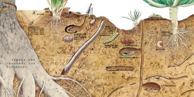 正版童书 地底下的动物 启发绘本 精装 松冈达英