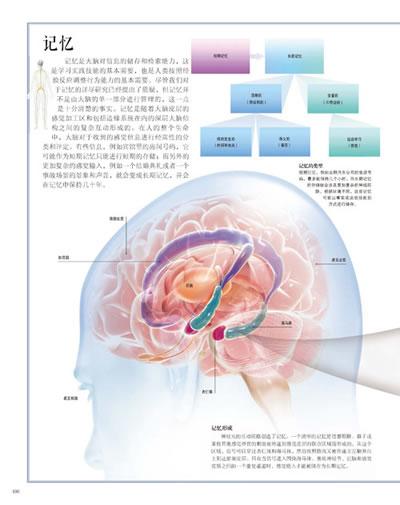 小脑结构图及功能图图片下载分享;