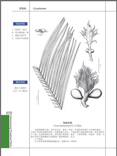 手绘濒危植物(1)