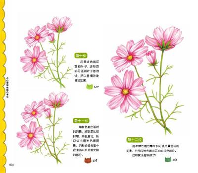 山茶花手绘插画