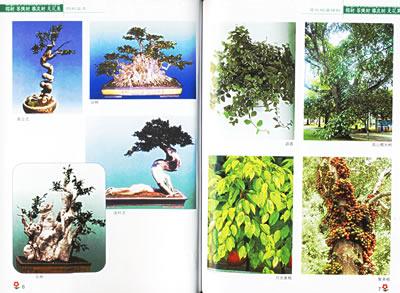 菩提树.橡皮树.无花果——百花盆栽图说丛书》